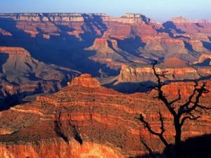 Arizona Legal Templates